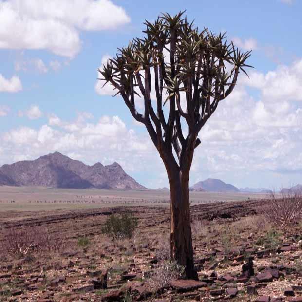 lodge-botswana-misterlodge-destination